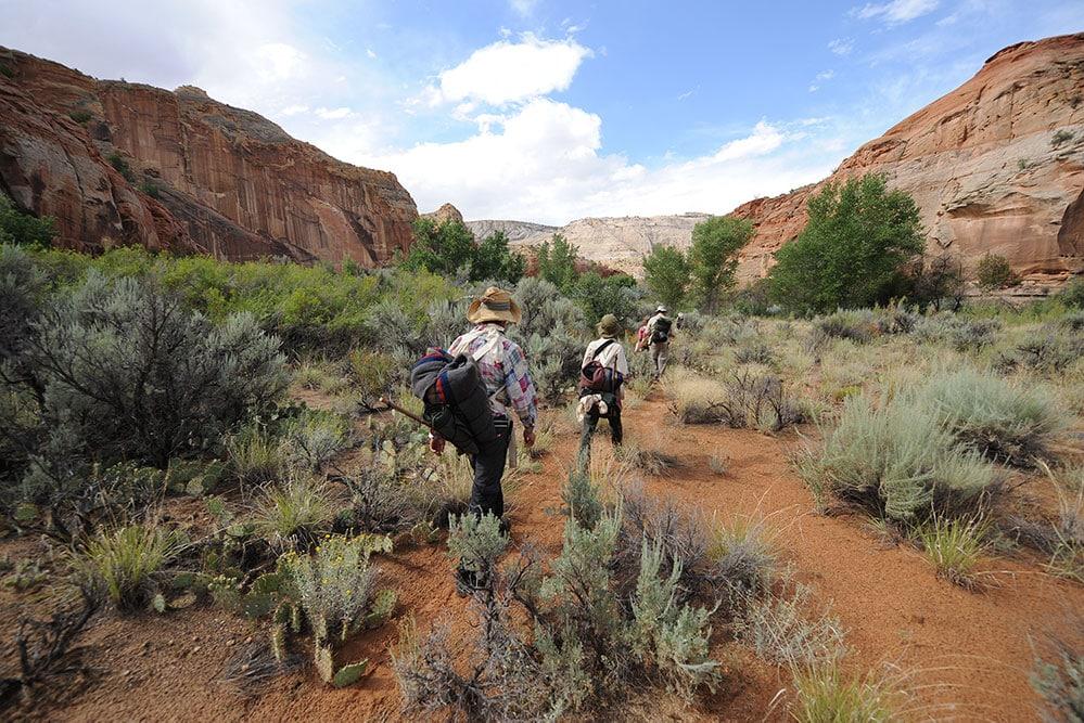 survival wilderness training